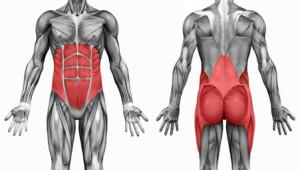 Romp spieren, welke zijn dat en hoe belangrijk zijn ze? 1